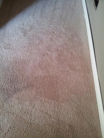After Carpet Stain Removal in Greensboro, NC